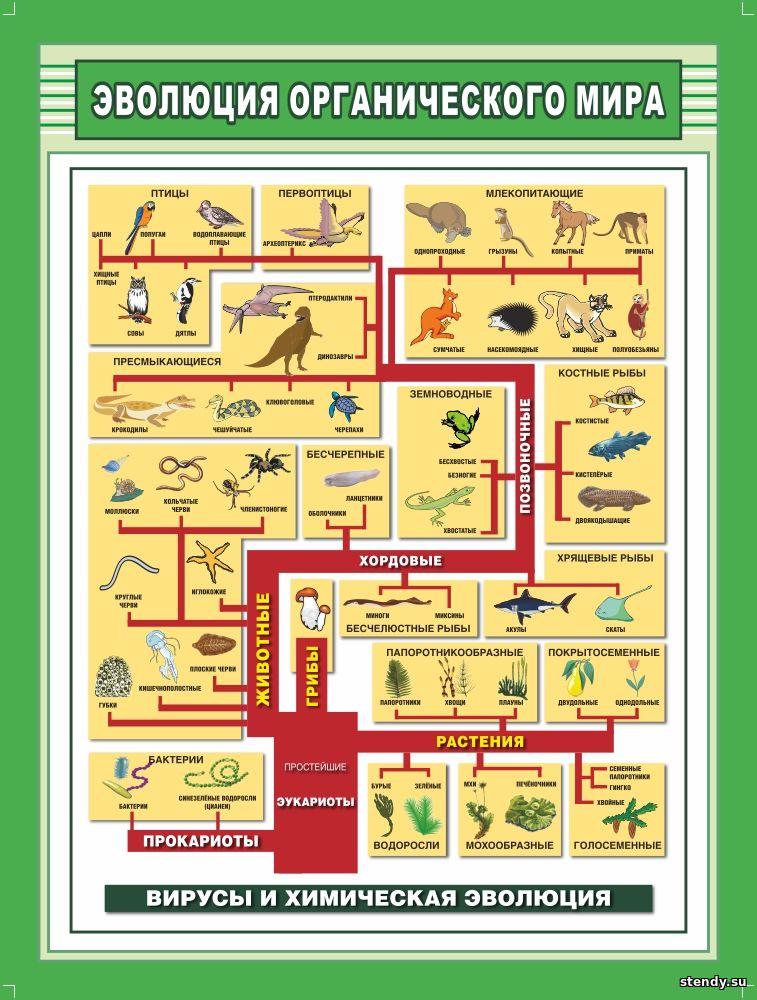 эволюция органического мира стенд, стенд по биологии, стенд в кабинет биологии, стенд в класс биологии, стенды для кабинетов школы